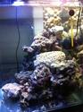 Nano reef de 60L (de plus!) 211b3410