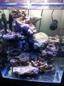 Nano reef de 60L (de plus!) C5a23110