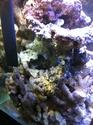 Nano reef de 60L (de plus!) F6b1b410