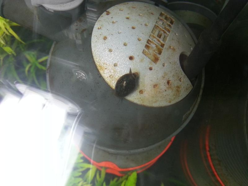 60L special crevettes 20120821