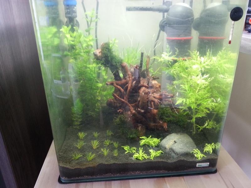 60L special crevettes 20120824
