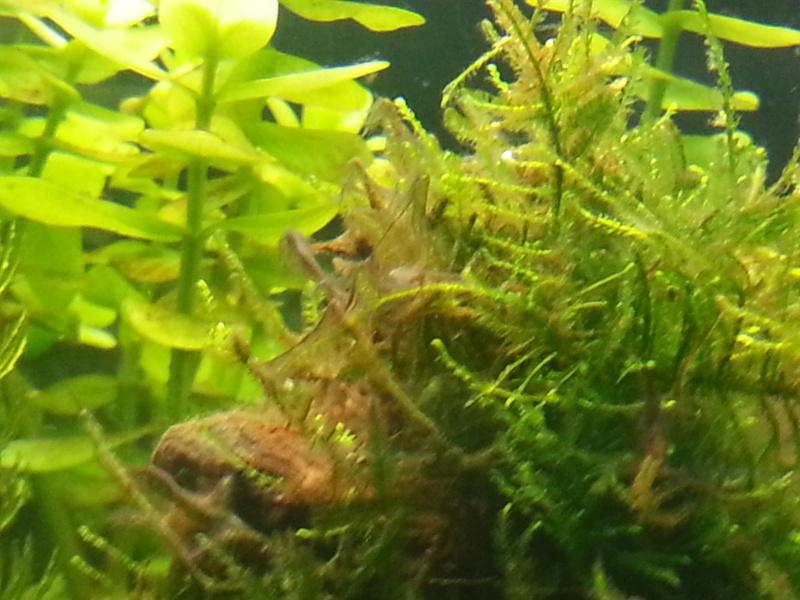 Algues plantes et lecture PH 20120913