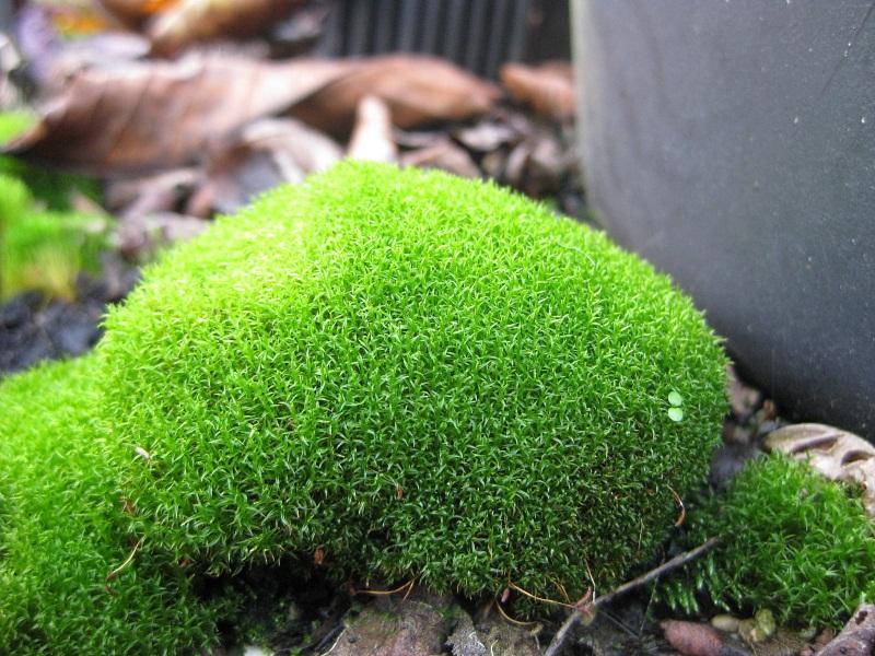 Zeigt her Eure ... Sporenpflanzen Img_8522