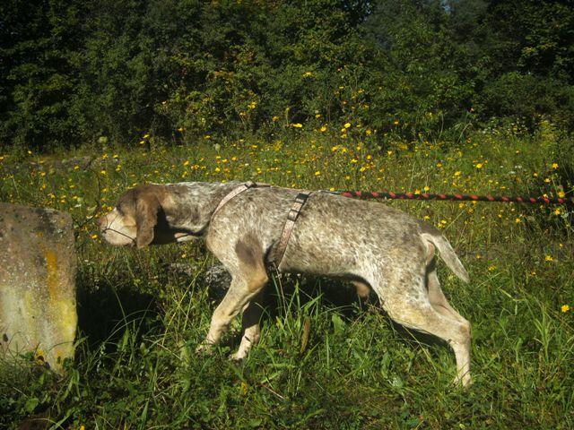 Pacco - der perfekte Hund 1-201213