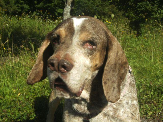 Pacco - der perfekte Hund 1-201214