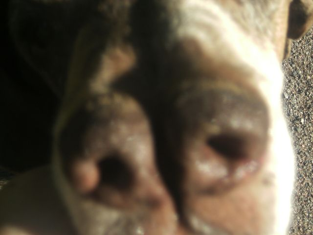 Pacco - der perfekte Hund 1-201217