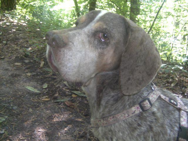 Pacco - der perfekte Hund 1-201218
