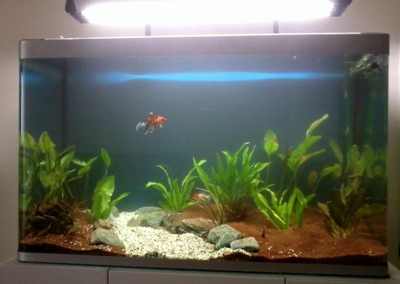 aquarium 244 litres et poissons rouges 2012-010