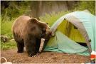Micr0 goes camping. Untitl14