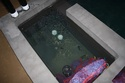 My first koi pond and construction Img_4711