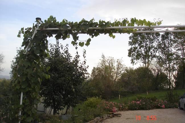 Ma vigne-framboise  grimpante Dsc04857