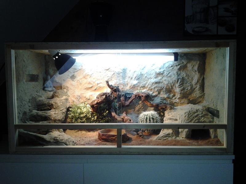 Voila le terrarium de mes pogona henrylawsoni 410