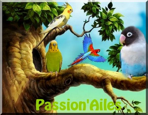 PassionAiles
