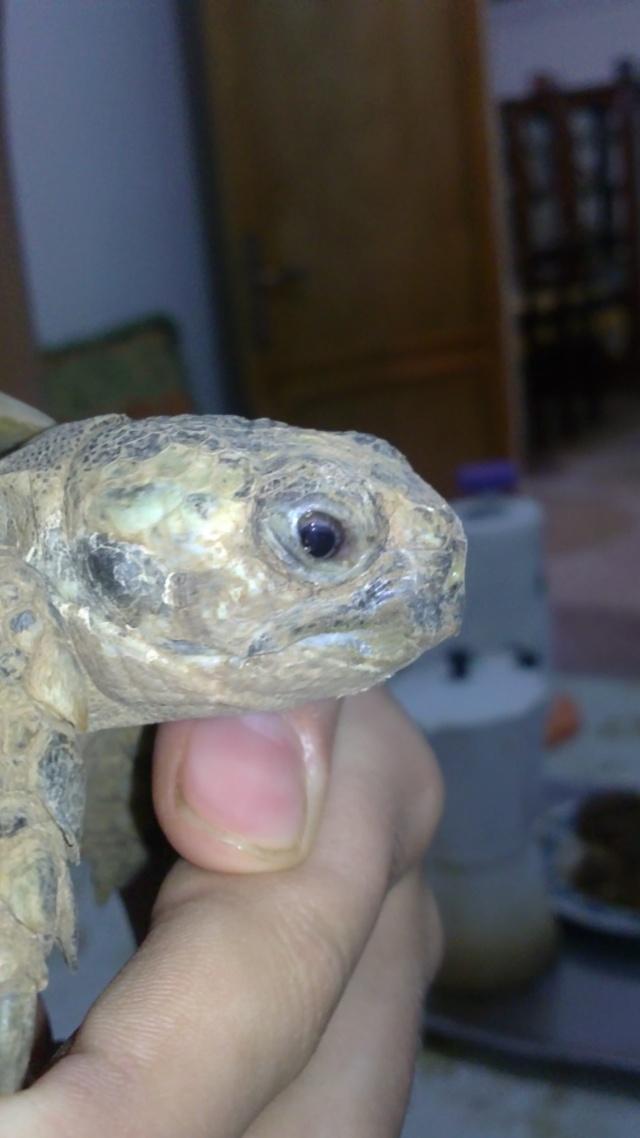 ma tortue va devenir aveugle ? 12082010