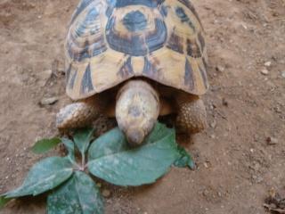 ma tortue va devenir aveugle ? Dsc02212