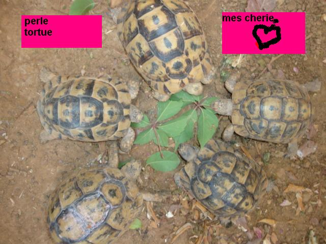 identification de mes tortue Dsc02218