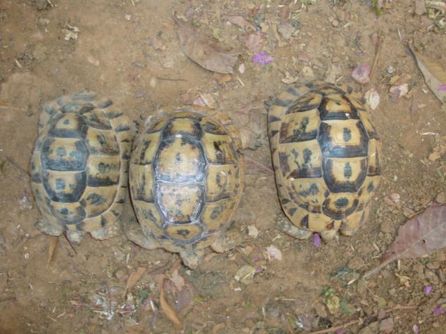 identification de mes tortue Dsc02219