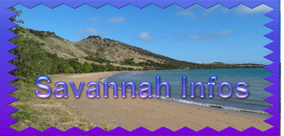SAVANNAH INFOS