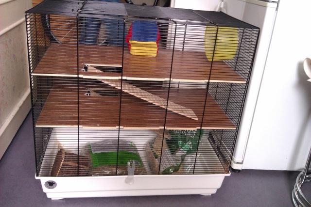 J'aimerais avoir quelques conseils sur les rats svp Imag0210