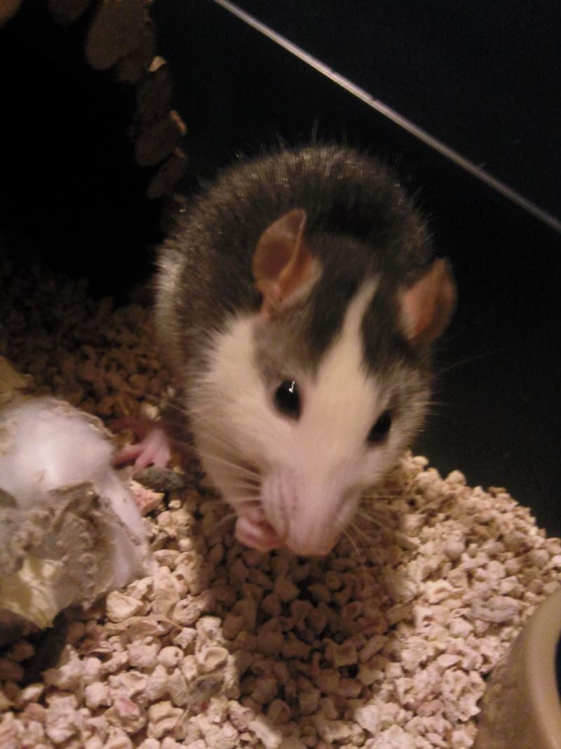 My Ratounes :) Photo011