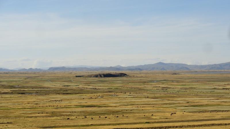Photographie : Cultures et élevage dans l'altiplano a la frontière entre Bolivie et Pérou, à proximité de Puno - Lac Titicaca Dsc08410