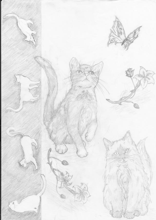 """""""L'idéal du calme est dans un chat assis"""" Chats_10"""
