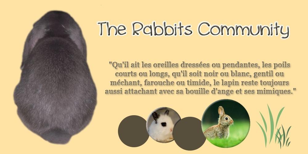The Rabbits Community