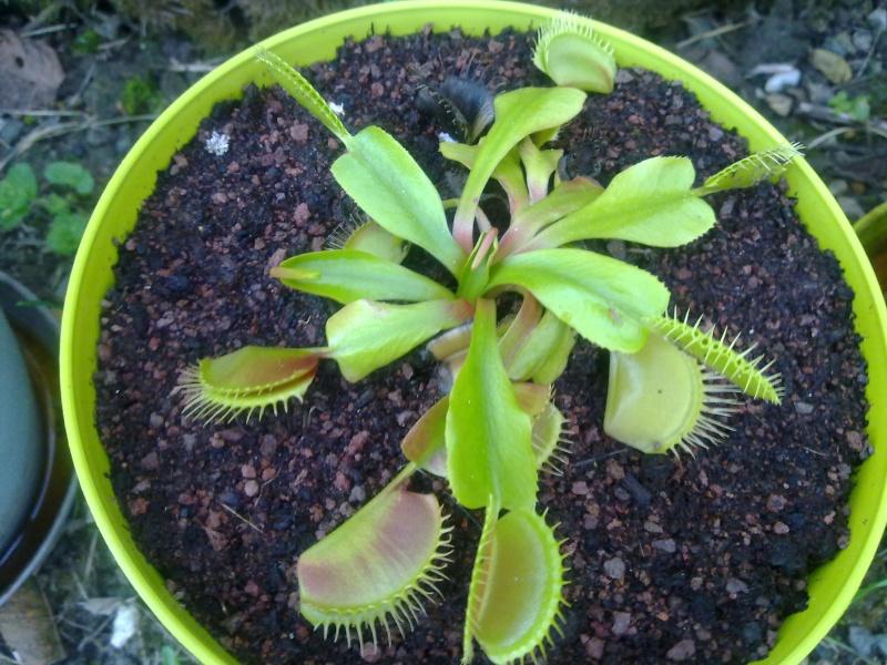 petites dentelures sur les feuilles 07082014