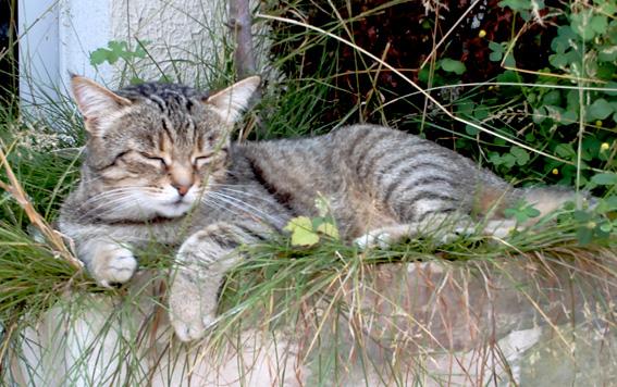 Trou dans la trachée d'un chat - Page 2 Min-ju10