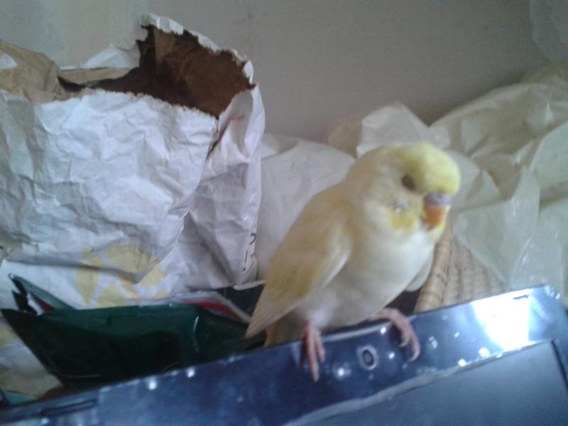Piou! [New Foto] 2012-017