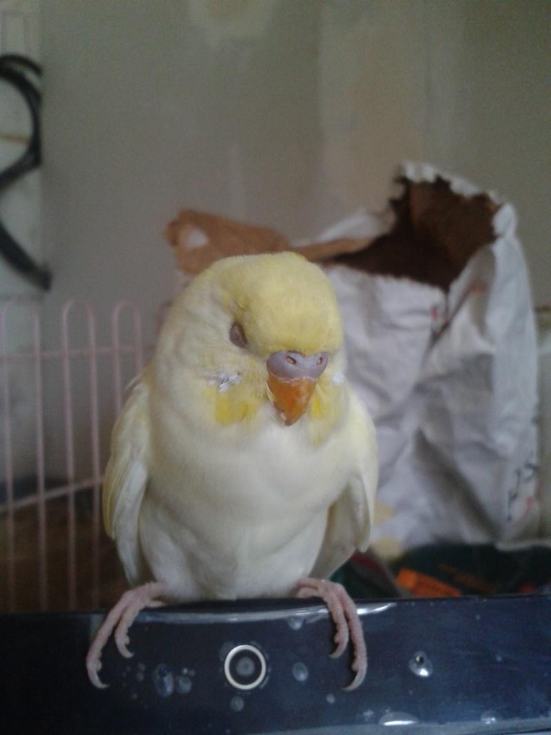 Piou! [New Foto] 2012-019