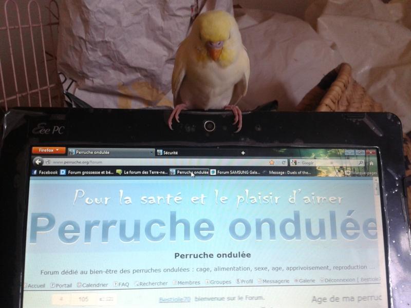 Piou! [New Foto] 2012-021