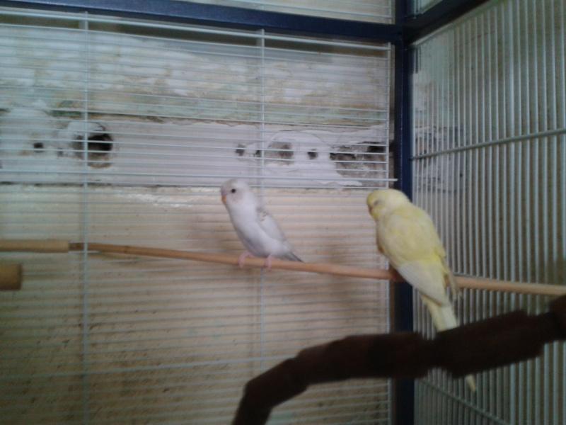 Piou! [New Foto] 2012-025