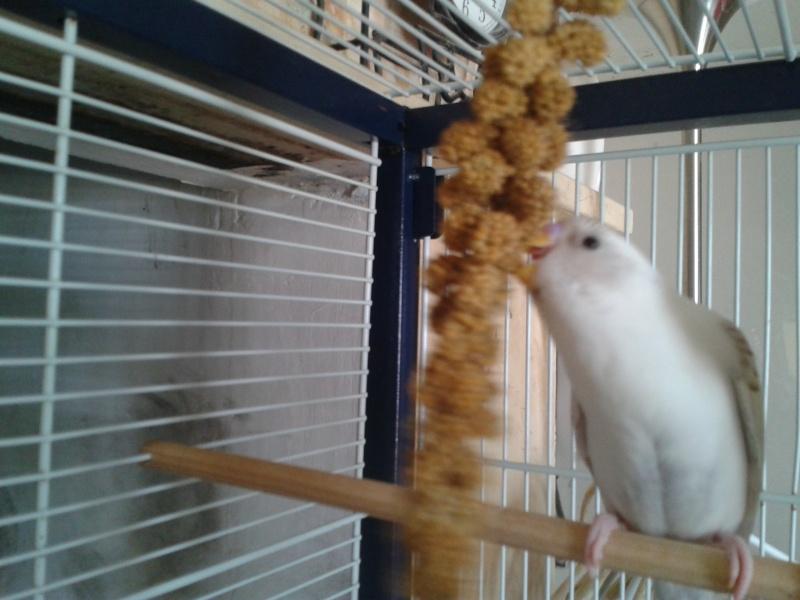 Piou! [New Foto] 2012-027