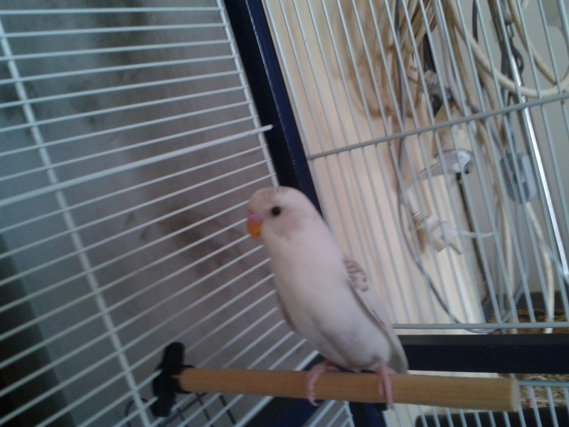 Piou! [New Foto] 2012-028