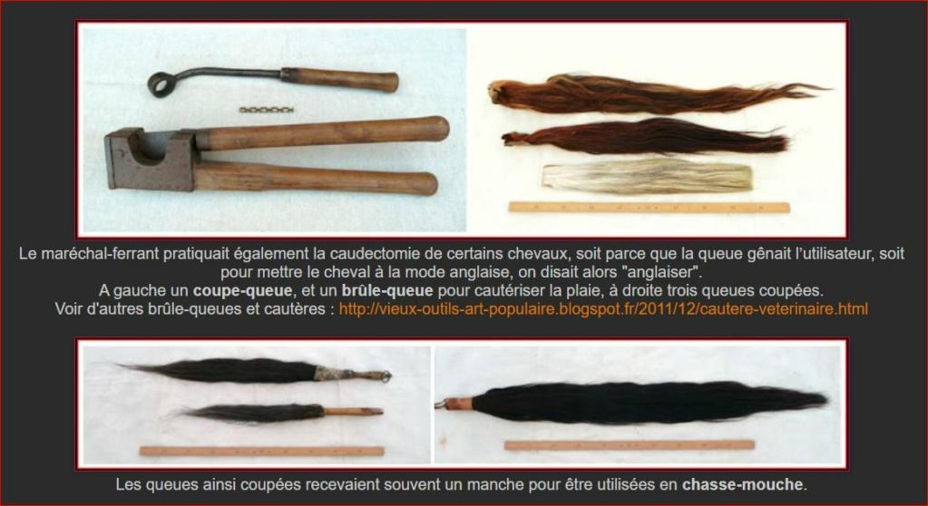 Ancien outil de maréchal ferrant  coupe queue ( caudectomie )   0a17