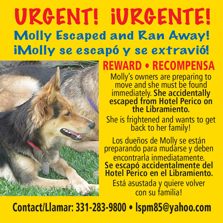 Lost Dog Molly_10
