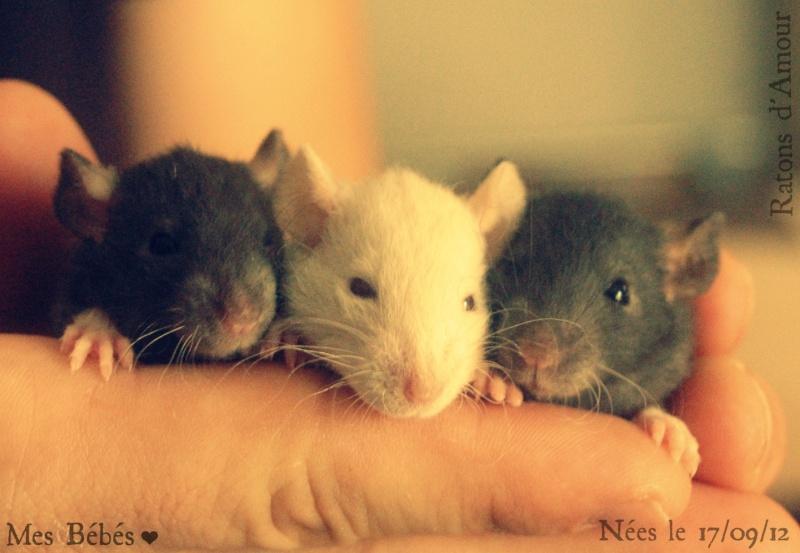 Mes 3 ratounes. ♥ Dsc_0211