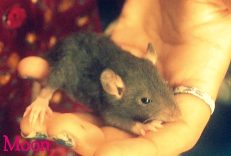 Mes 3 ratounes. ♥ Dsc_0212