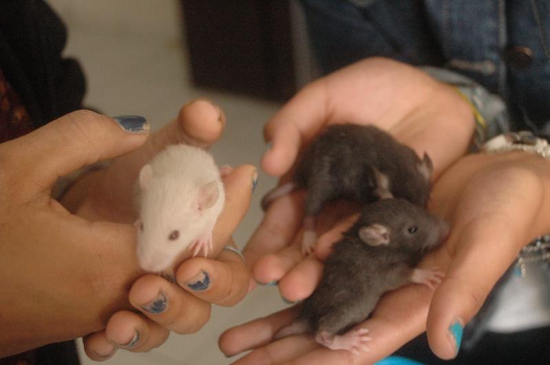 Mes 3 ratounes. ♥ Dsc_0214