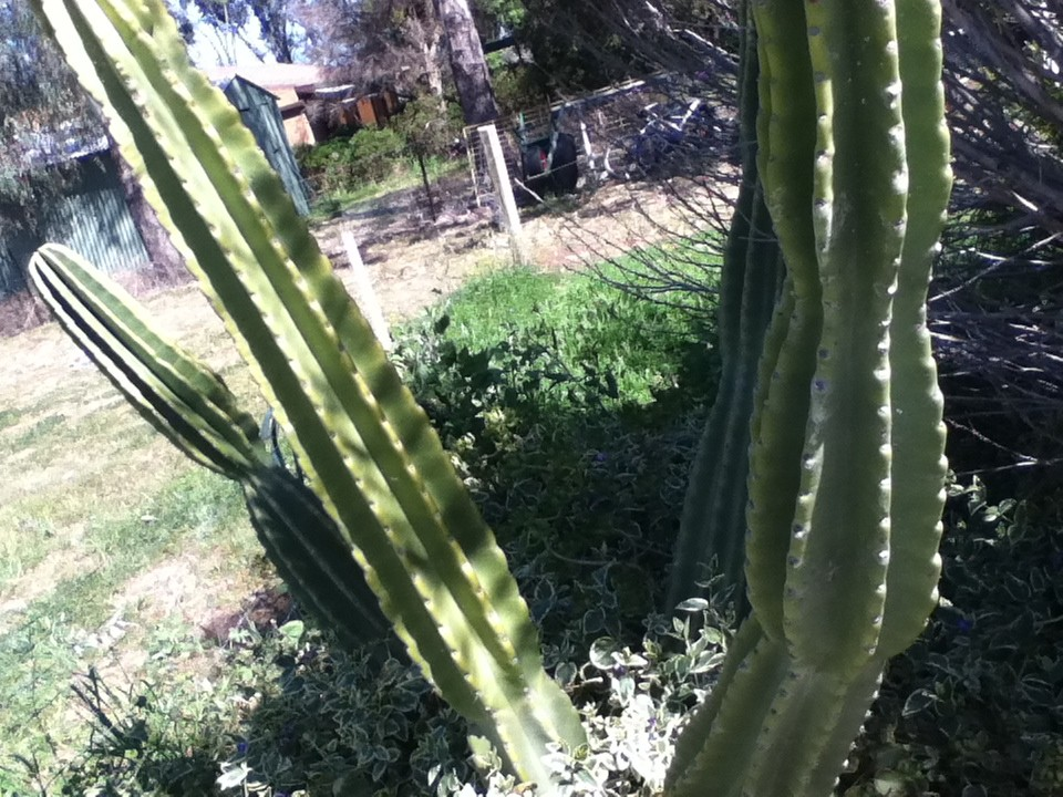 Im new to this forum , can anyone help me with these cactus ? Name etc  Img_0213