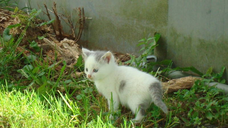 Donne chatons 00111