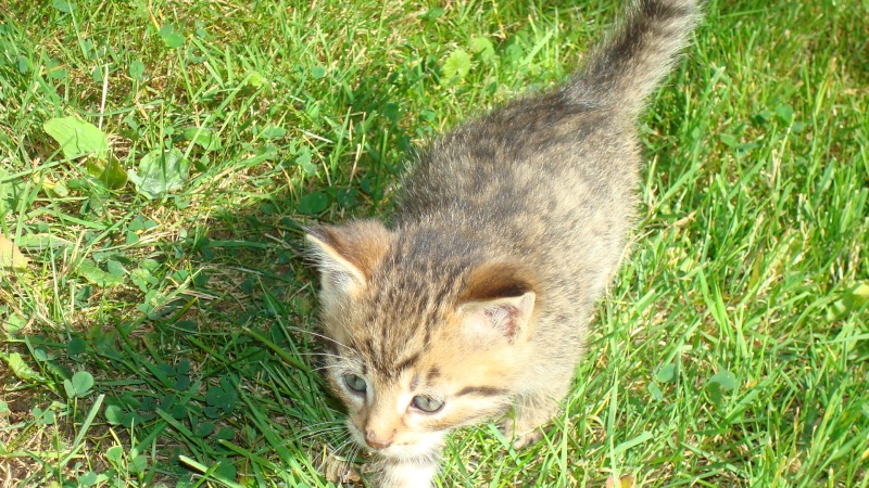 Donne chatons 00411