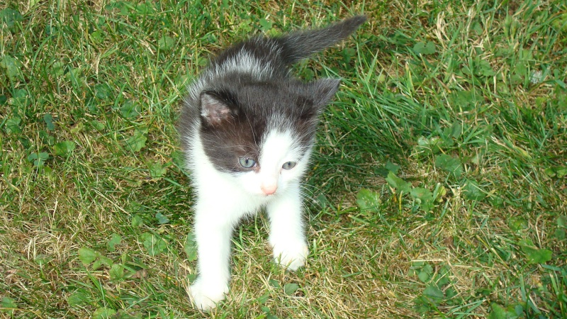 Donne chatons 01010