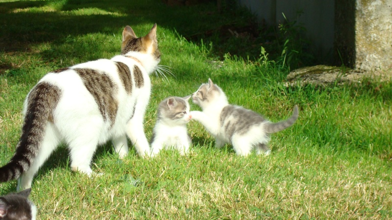 Donne chatons 01210