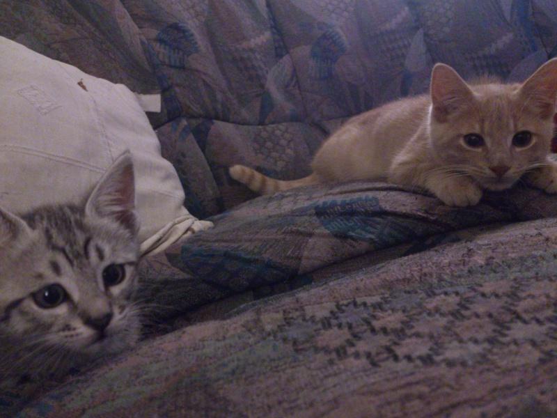 Dexter et Miss NoName :D Dsc_1212