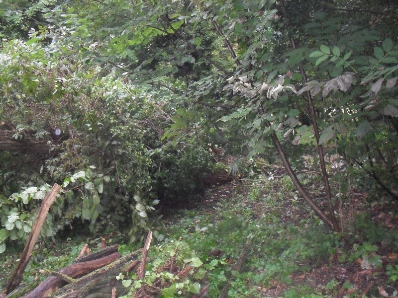 alberi abbattuti dai temporali Sdc11211