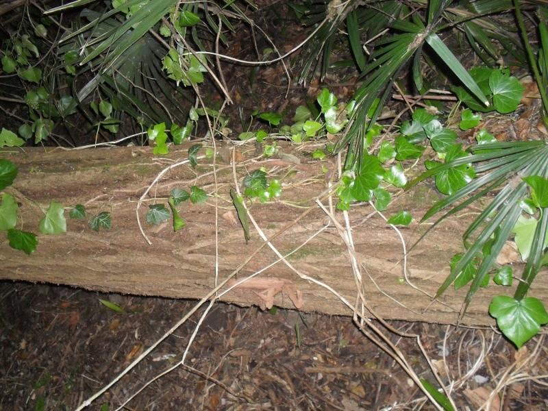 alberi abbattuti dai temporali Sdc11212