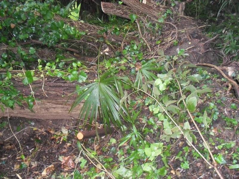 alberi abbattuti dai temporali Sdc11214