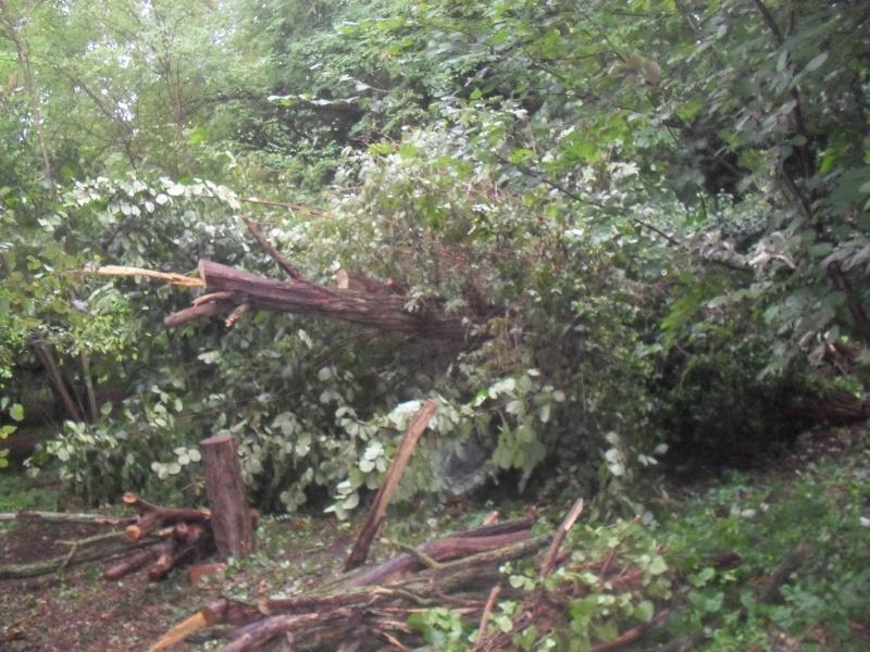alberi abbattuti dai temporali Sdc11215